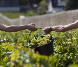 Les vins de Bourgogne, éloge du temps…