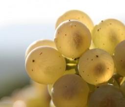 Domaine Guyon, viticulteur à Vosne-Romanée