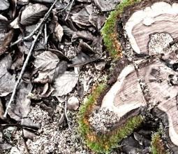 ILÉO, taille et abattage d'arbres
