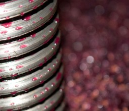 Vinification du Pinot noir en 2012